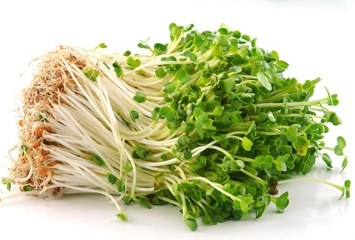 How to Make Bean Sprouts