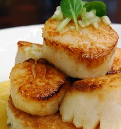 Sauteed Scallop Recipe