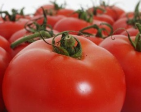 recipes using sweet tomatoes